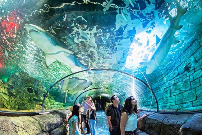 Bảo tàng hải dương học Sedney Aquarium