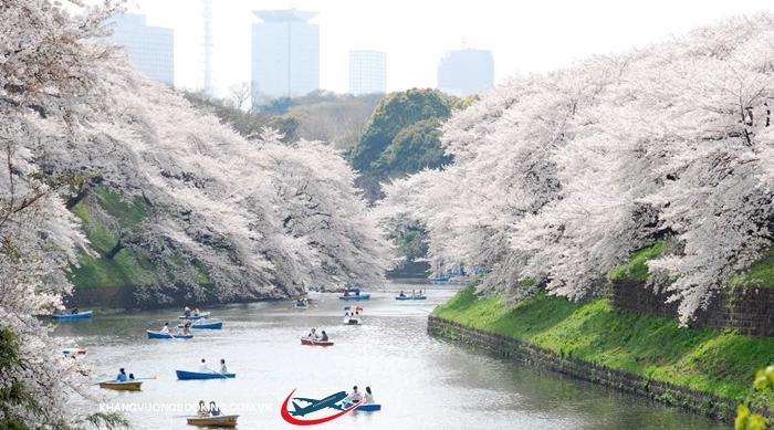 Lễ hội hoa anh đào ở Tokyo