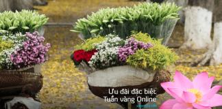 VNA KM Tuần vàng Onlines san vé khứ hồi bay quốc tế