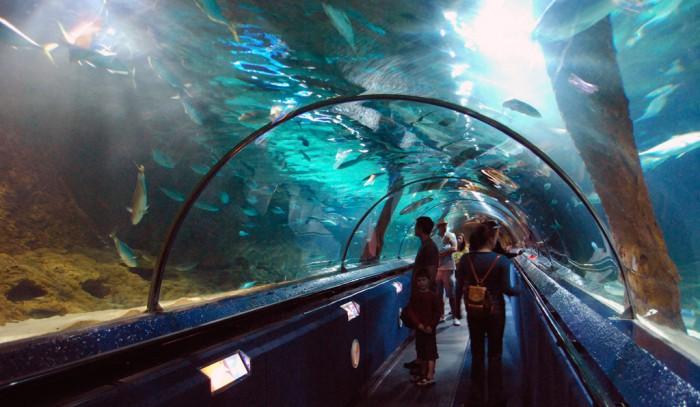 Auckland Water World Kelly Tarlton