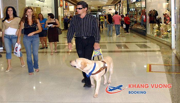 Chó dẫn đường cho người hạn chế di chuyển trên máy bay