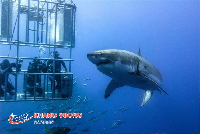 Quan sát cá mập từ trong lồng kínhQuan sát cá mập từ trong lồng kính